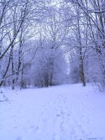 snowy fields -forests- 60 by dark-dragon-stock