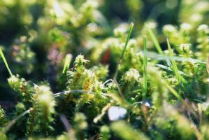 moss by Laplum