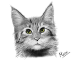 Green-eyed cat by Elivy