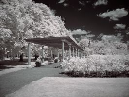 IR Trellis in the Rose Garden by Wallcrawler62