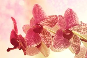 Glossy Orchid by Lufty09