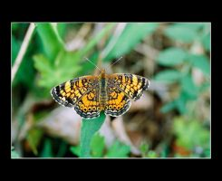 Butterfly 2 by DG-Photo