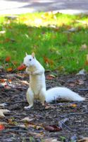 Nutty Albino Squirrel by maddhatter-z