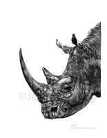 Black Rhino by JessicaHsiung