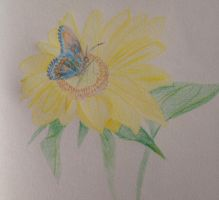 Butterfly on the Sunflower by Rosepupp