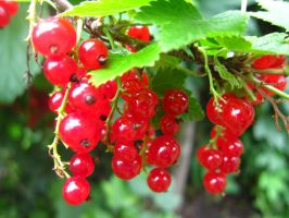 Red Currants by QueenOfGalaxy
