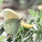 Butterfly In Pastel by HelenaMim