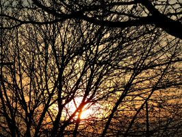 So Many Branches by Michies-Photographyy