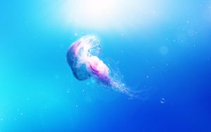 Jellyfish wallpaper by InfiniteCreations