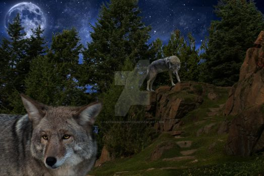 Deceiving Spirit - Coyote Spirit Guide ::2013:: by FantasiasGraphics