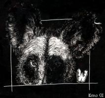 W is for Wild Dog by kubo