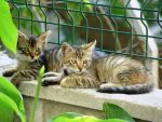 Little cats by Veritas3
