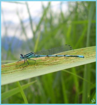 Dragonfly by HELLen277