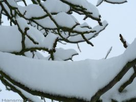 More snow on branches by Hansmar