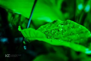 Dew On Leaves 02 by kuriee
