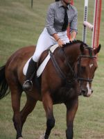 STOCK Showjumping 473 by aussiegal7