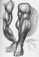 anatomical studies 1 by nickybeats