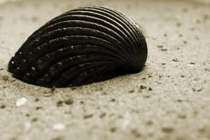 a shell by Schnitzelyne