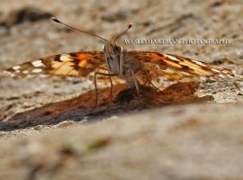 The Moth! by WesHPhotography