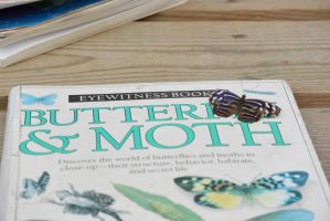 Butterfly On Book, Learning the Facts 2 by Miss-Tbones