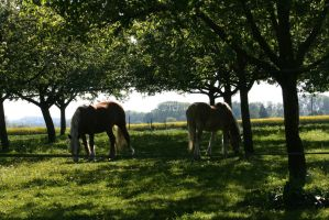 yard with horses by ingeline-art