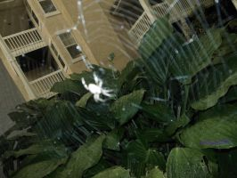 Project 365, day 227: Spider Encounter by sandyandi146