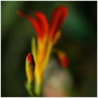 Colour of Life IV by GreenEyedHarpy