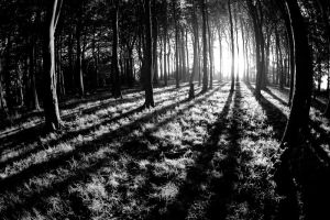 Beech Wood Dawn 2 by Grunvald