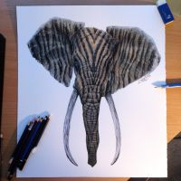 Color Pencil Drawing of an Elephant Zebra by AtomiccircuS