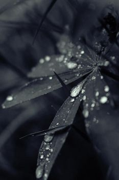 after rain by freeminds