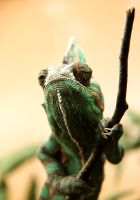 Chameleon by Magic-Realm