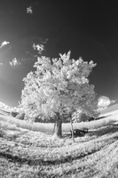 Trees painted white - VII by sorny
