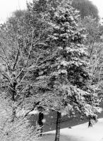 Spight and Light, Snow Delight by Juwelstone