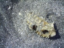 A fish in the sand by clyder