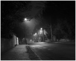 road by Tiger--photography