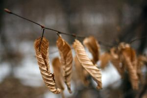nature 0141 leaf by remigiuszScout