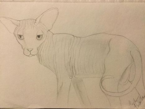 Sphynx Cat Sketch II  by Gothic-Night-Raven