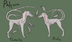 Palqwa Ref by ThisDyingDog