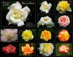 Dew and Roses Calendar by Eolhin