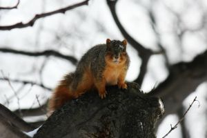 Squirrel Says Hello! ...Again by AndehDulac