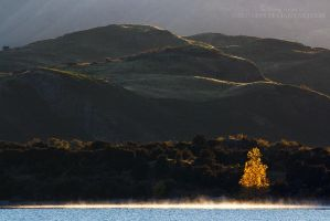 Backlit tree, Lake Wanaka by GregArps
