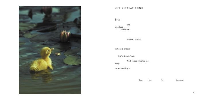 Life's Great Pond  -by Cornish Poet Clive Blake by CliveBlake