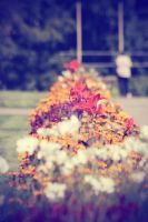 Flowers' by TheLifeInFocus