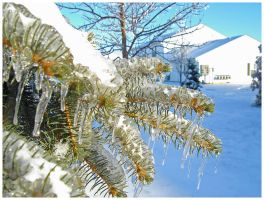 2004 Ice Storm Victim by darthpayback