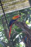 colorfull parrot by mailtoejas