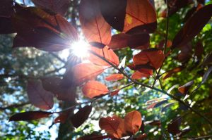 Sunny Leaves by Madzphotos