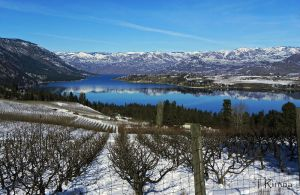 Orchards and Vineyards  by TRunna