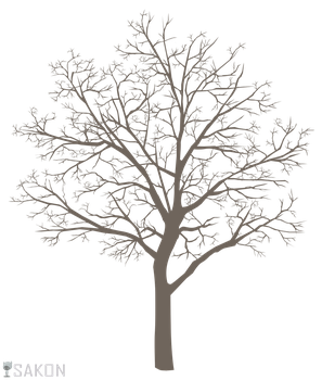 Basic Tree Meme PNG by Sakon04