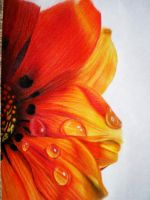 colored pencil flower by tothelastparade