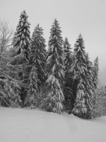 Snowy forest of Grande Charteuse 3 by A1Z2E3R